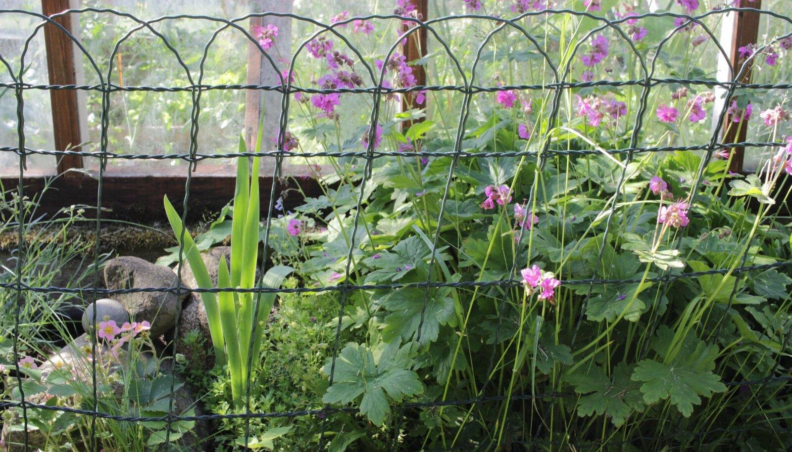 Piire kaitseb lillepeenart liiga agarate koduloomade eest.