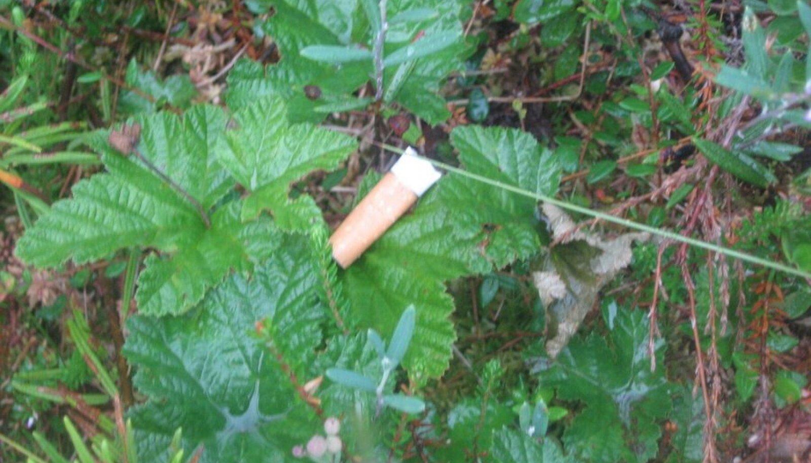 Suitsukoni rabas