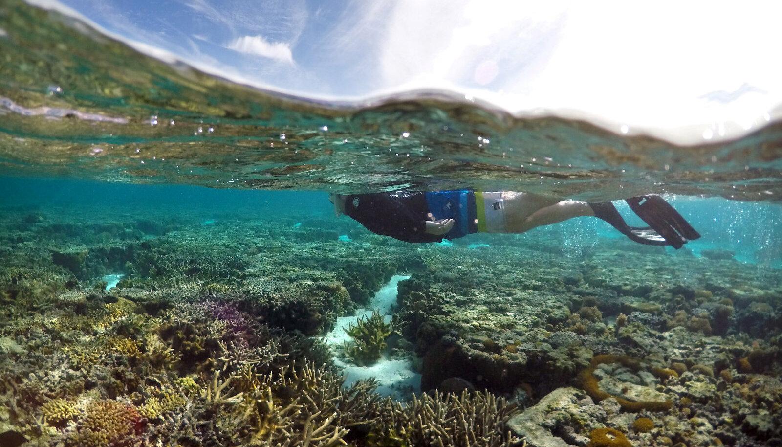 Snorgeldaja Queenslandi lähistel Suure Vallrahu kohal meres.