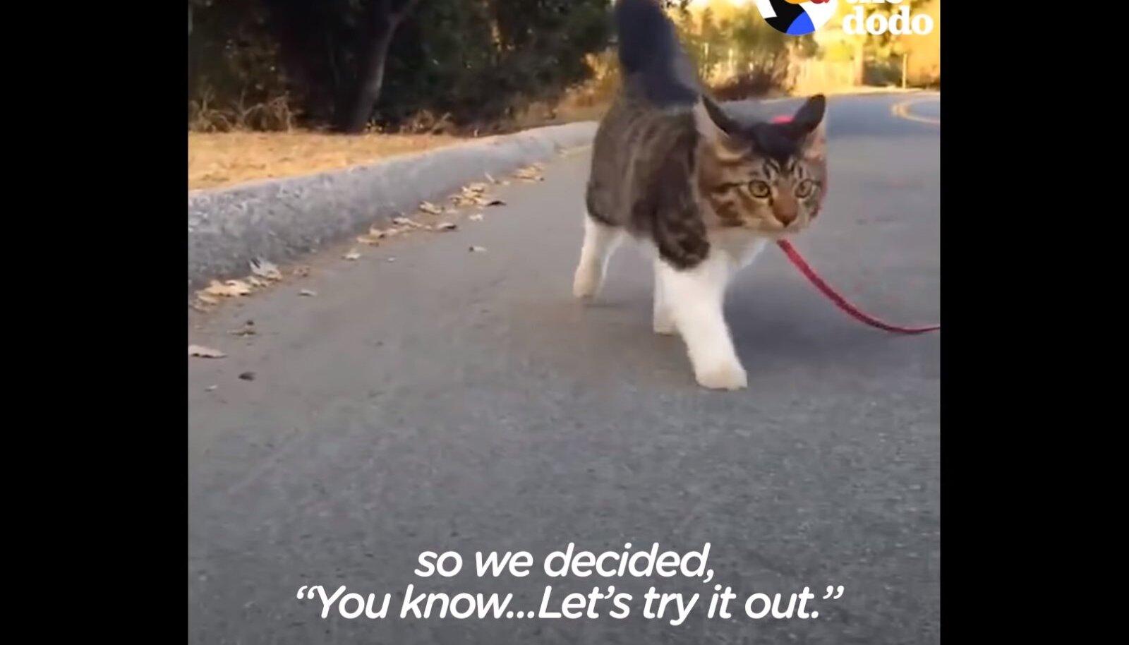 Kass Rosie koos koertega jalutamas