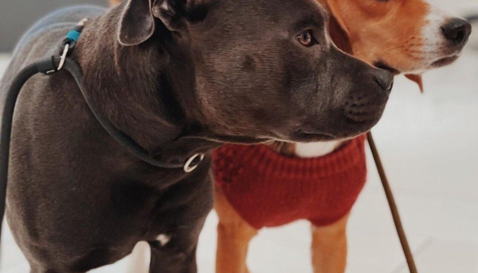 Koerad Ülemiste keskuses