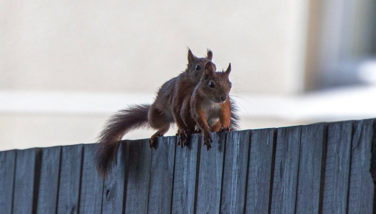 Kuhu on jäänud oravapartei maksuvabastus kõigile?