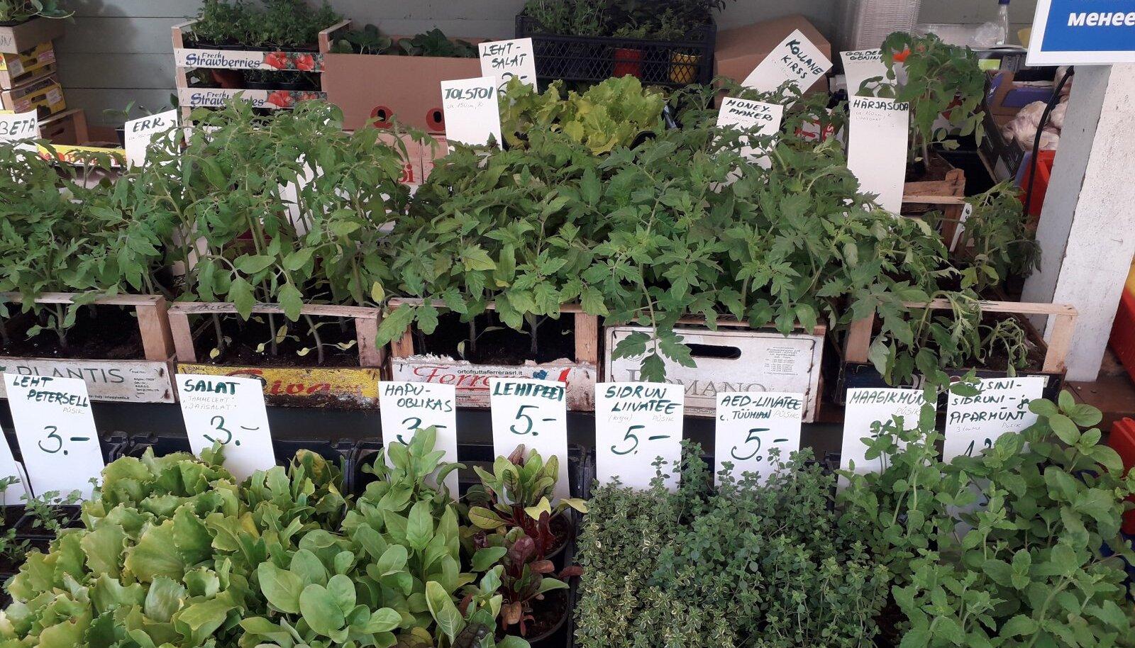 Nõmme turg rohetab taimedest.