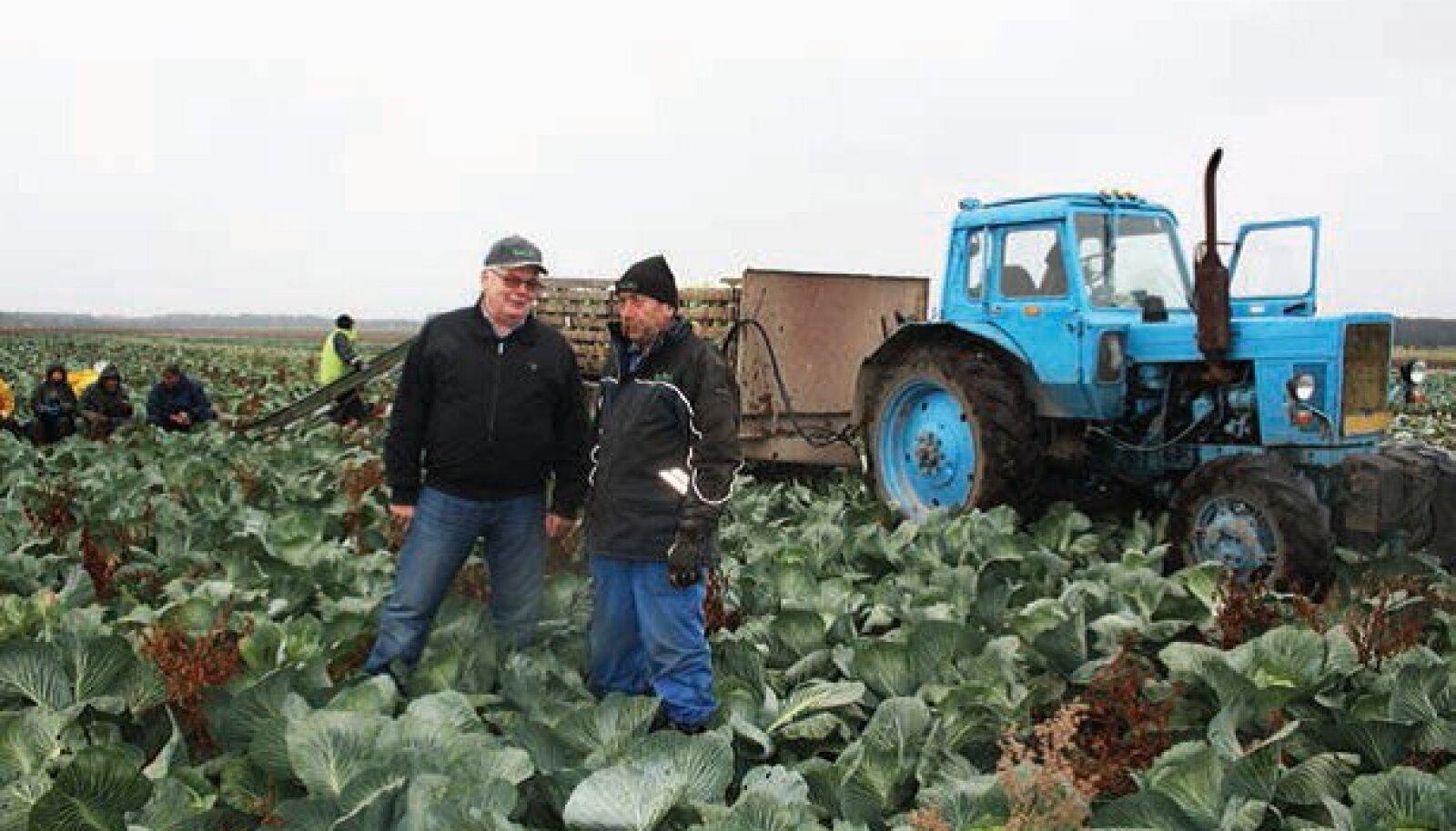 """Laagri suure köögiviljatootja Sagro juht Kalle Reiter (vasakul) hindab Vene kaubandussanktsioonide mõju pigem olematuks. """"Hinnad on küll madalad, aga nii on igal sügisel, kui on parasjagu kõige massilisem koristusperiood ja kõik tahavad ruttu kaubast laht"""