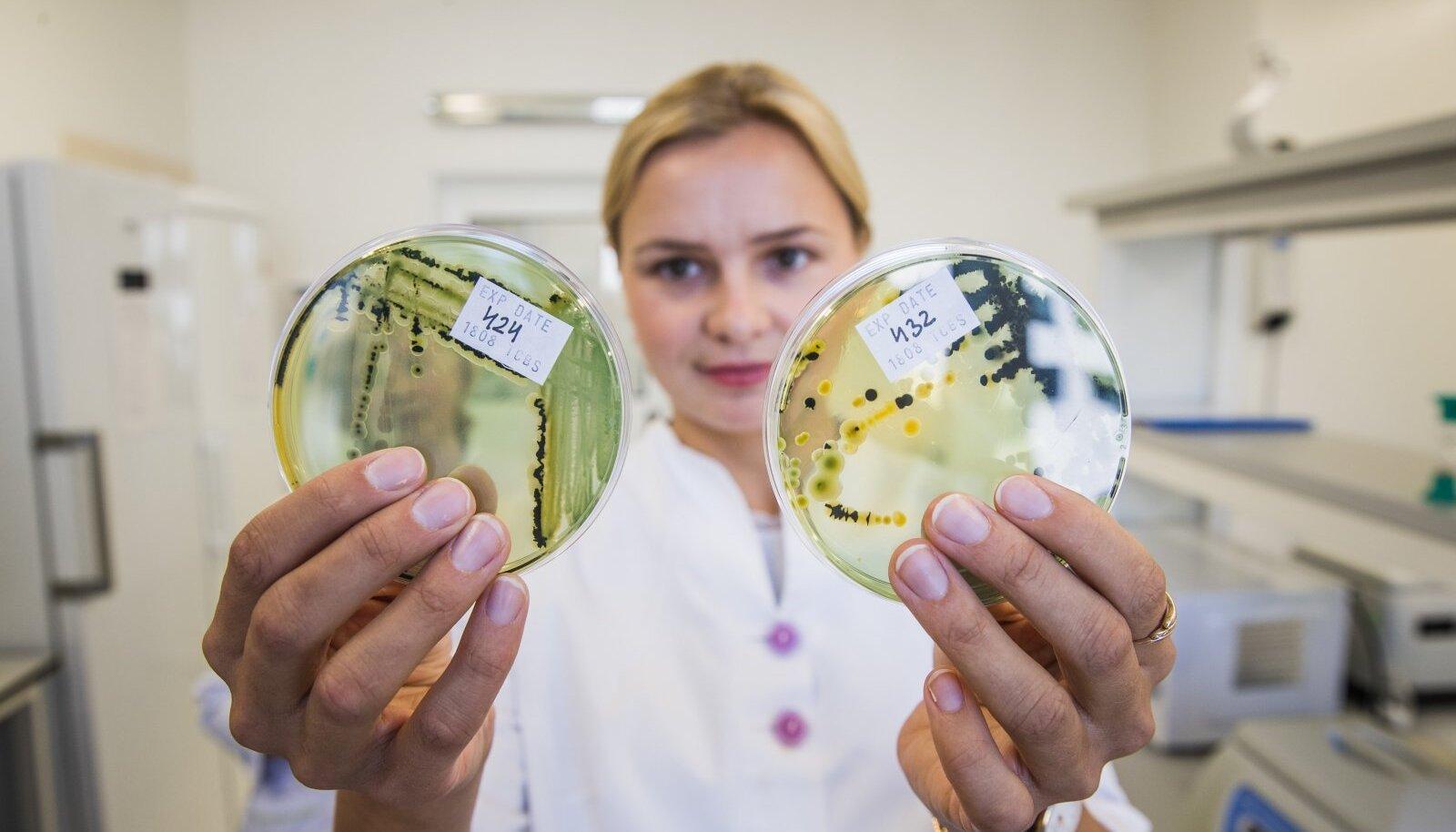 SALAKAVALAD NUNNUD MUMMUD: Kollast värvi mummud on vibriobakterite pesad ja musta värvi pesad on kolibakterid.