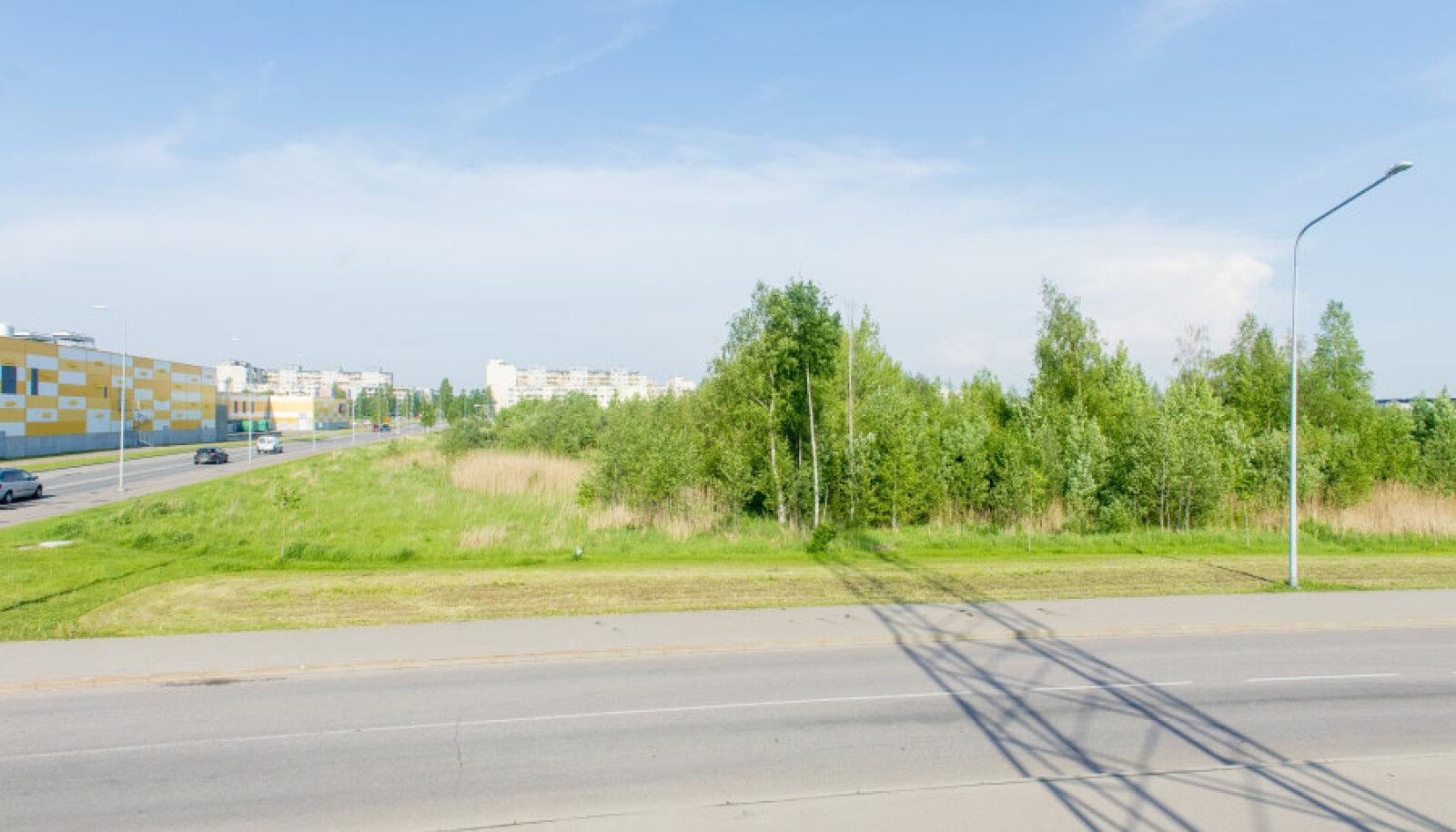 Toppama jäänud Tallink City asukohal kasvab tihe võsa. Samas sõnab ekspert, et sellist keskust tasuks rajada just Lasnamäele.