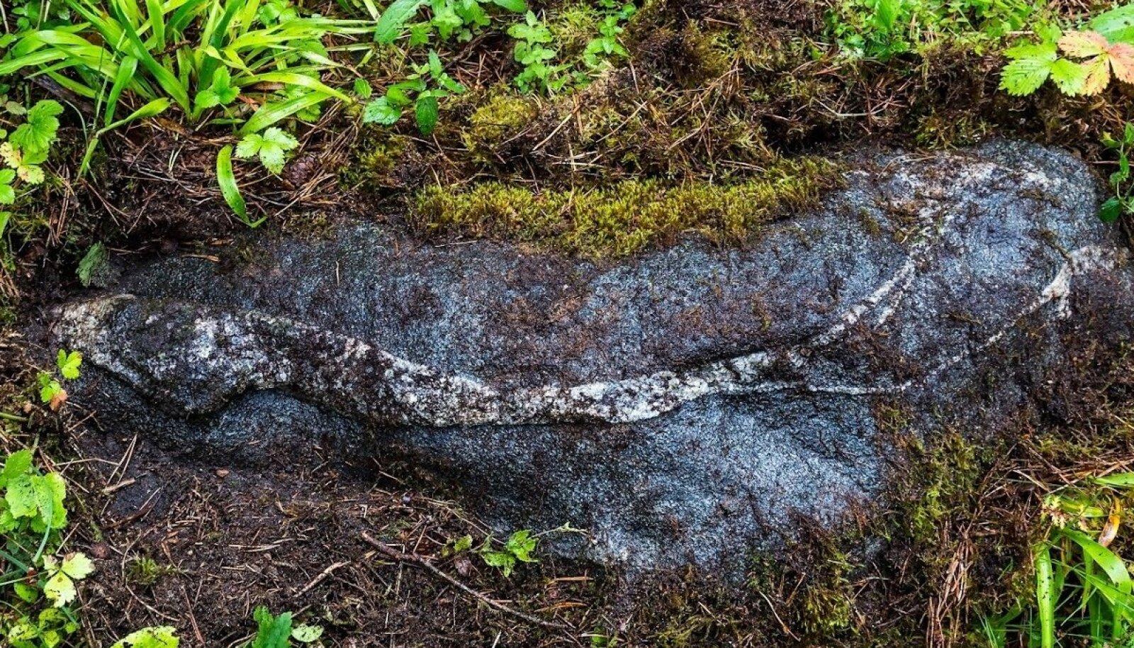 Ussikivi Saaremaa muinasobservatooriumis. Kohaliku ussikultuse konteksti asetub see kivi kahtlemata. Kui viisnurk on emajumala sümbol, siis madu on emajumaliku tarkuse võrdkuju. Kivisse jäädvustunud madu maa peal ja Põhjamao nimeline tähtkuju kõrgel üleval, kus tema Põhjanaela ümber ringi käib, kuulusid kumbki muinasobservatooriumi vardjate huvisfääri – samuti kui kiviviisnurk all ja Venuse viisnurk ülal.