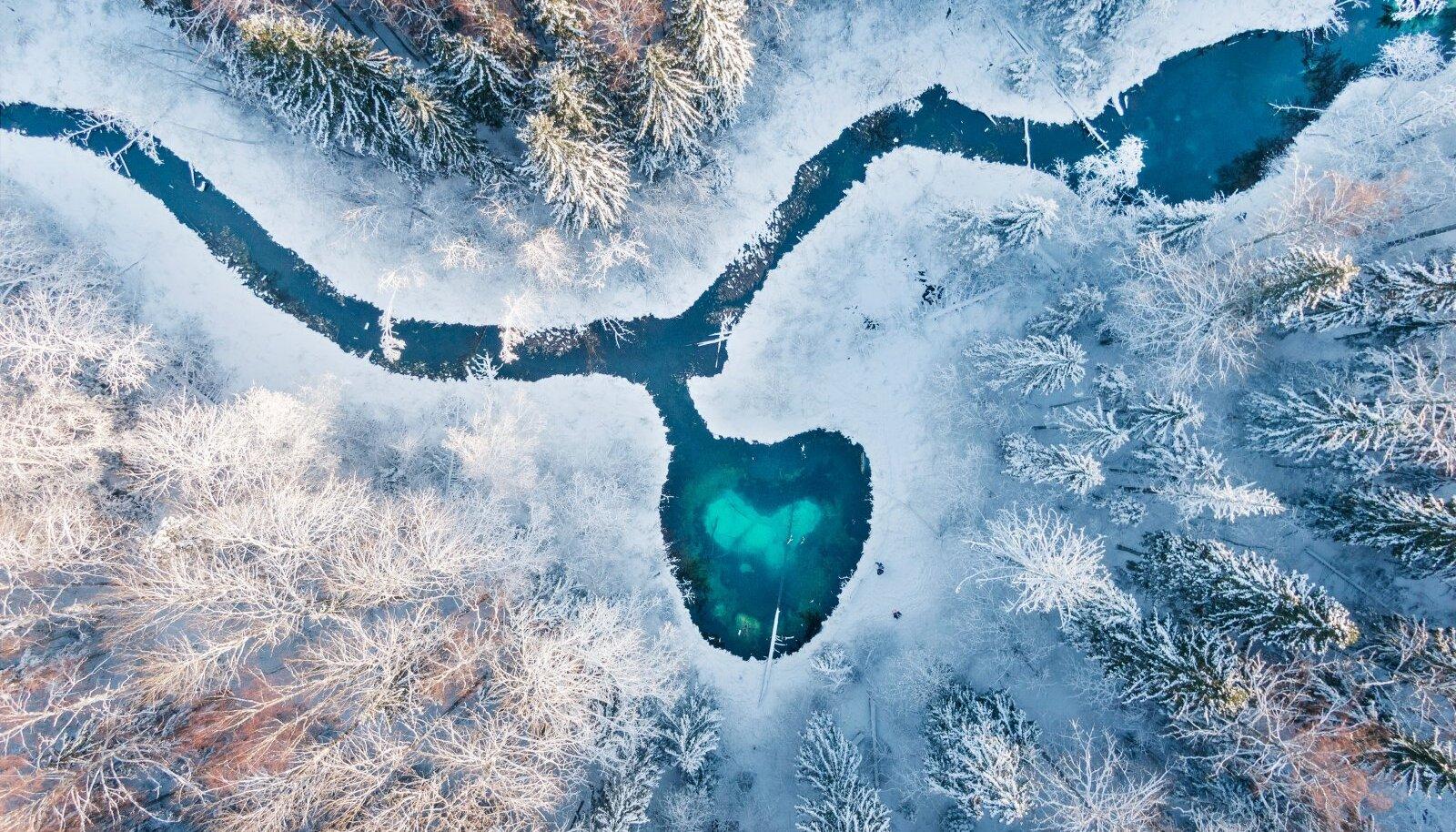 Hiite kuvavõistluse 2020 üldarvestuse peaauhind: Metsa süda