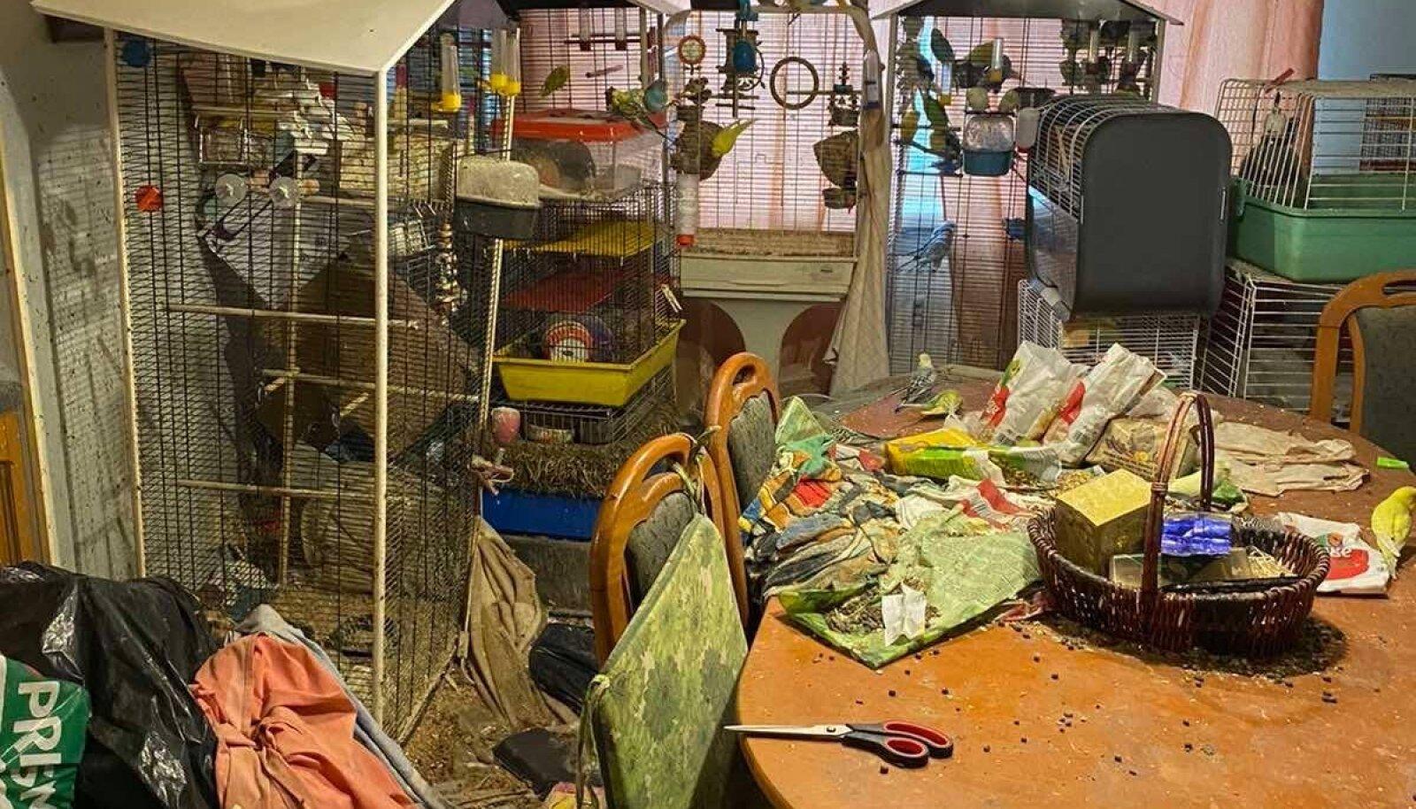 Kodu, kus elab hoomamatu arv lemmikloomi
