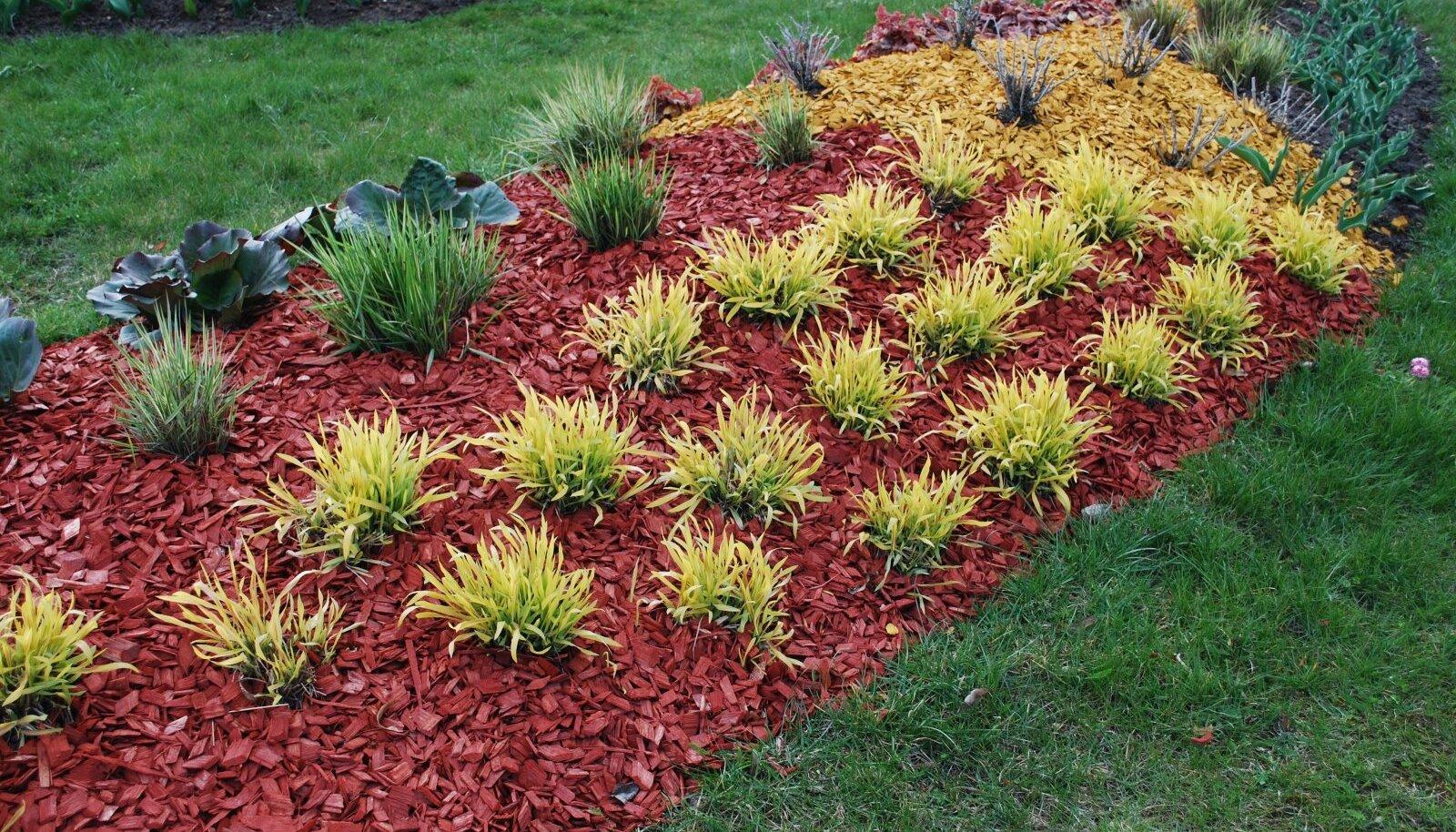 Värviline multš toob heledamate lehtedega taimede ilu veelgi enam esile.