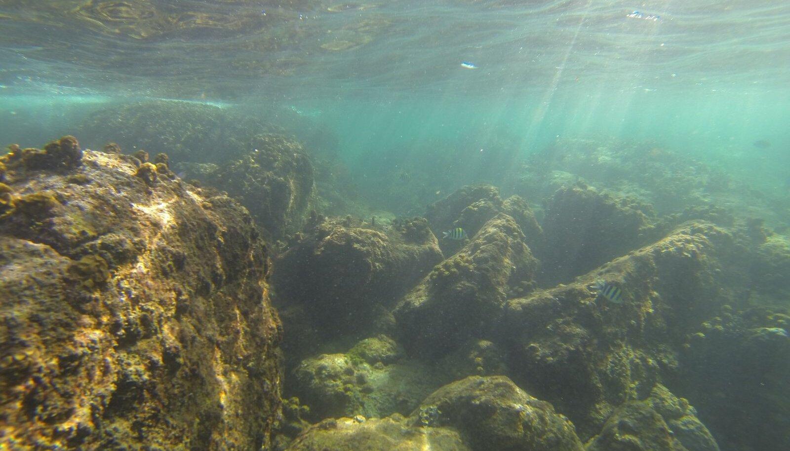 Korallid