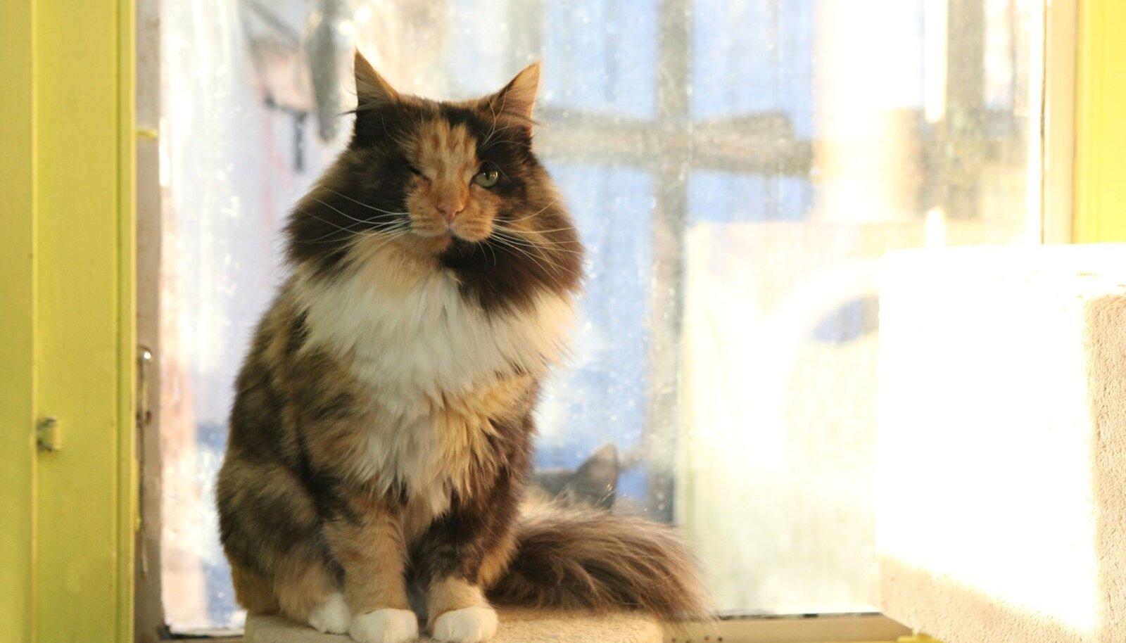 Kass Kiti