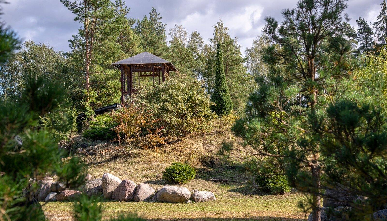 Keldrimäe künkale annavad ilmet okaspuuvormid, künka külgedele istutas Tiina metsmaasikad.