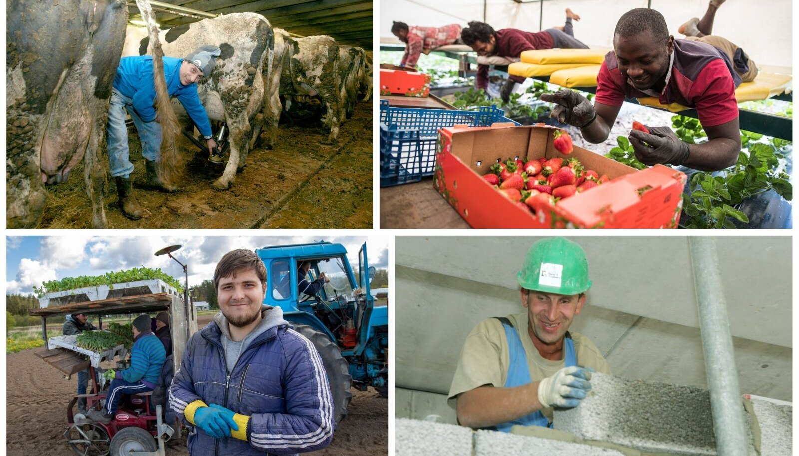 Kokku töötab Eestis põllumajanduses ja aianduses umbes 3000 välismaalast, peamiselt ukrainlast.