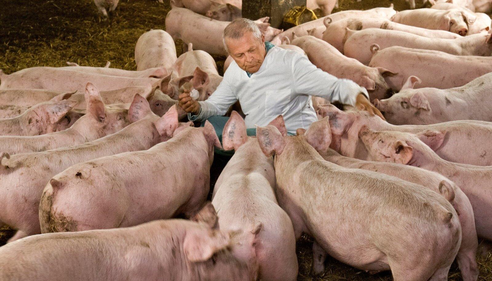 """""""Hoiame pöialt, et farm täistabamust ei saaks, muidu tuleb kõik isolatsiooni saata ja sead jäävad söötmata,"""" ütleb Aare Kalson."""