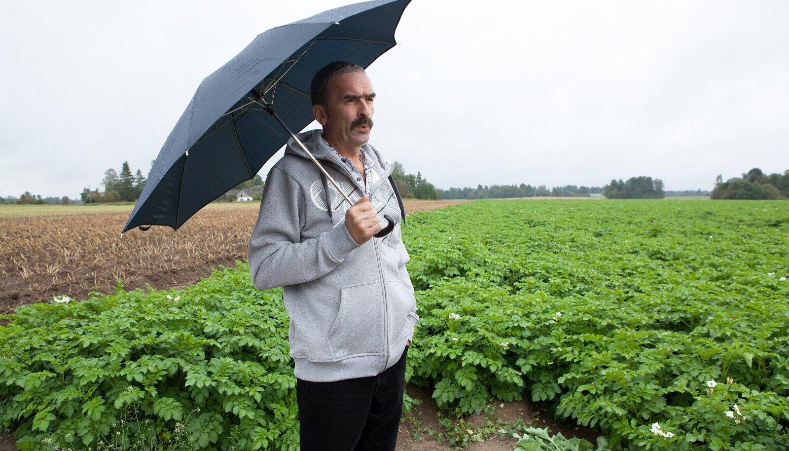 Kartulikasvataja Kalle Hamburg on rahul, et põllud vihma said.