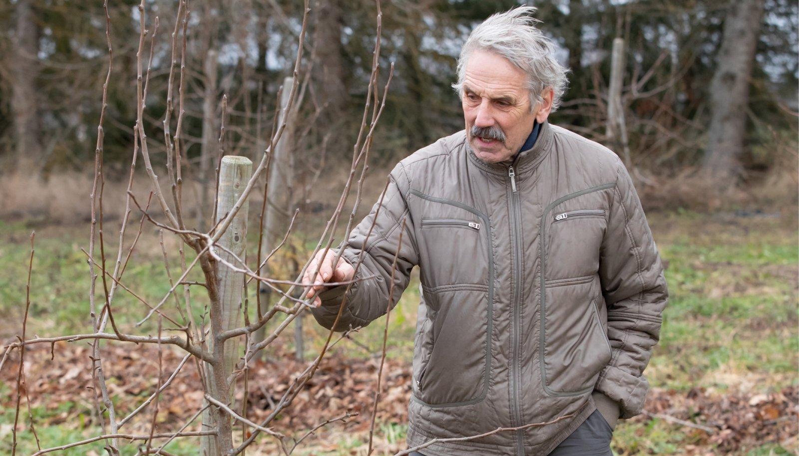 Tõnu Oks tahab proovida uusi asju: peale maasikate kasvatab ta vaarikaid, kultuurmustikaid, pampleid, sõstraid, astelpaju ja õunu-pirne.