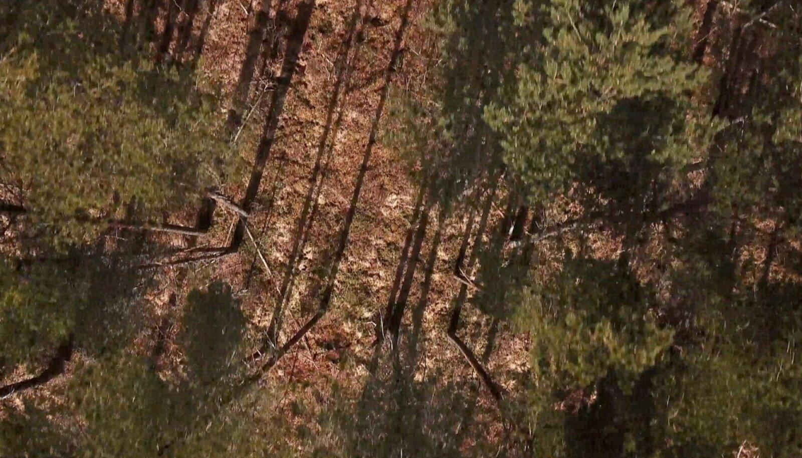 MTÜ Kogukonna Metsad tahab Läänemaal Haeskas metsafirmalt osta maad, et päästa metsa lageraiest. MTÜ juhatuse liige on Rea Raus, kelle kodu lähedal mets asub.