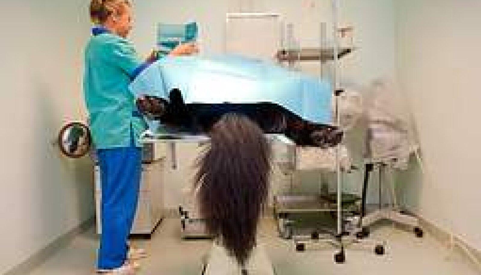 DELIKAATNE PROTSEDUUR: Loomade opereerimine on sama kulukas kui inimeste lõikamine. Annika Haas