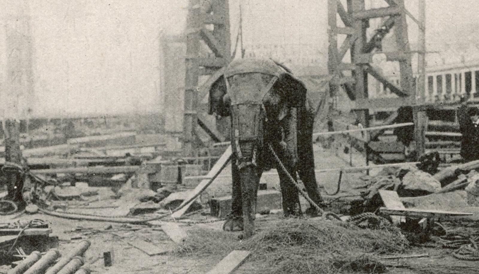 """Electrocuting an Elephant"""
