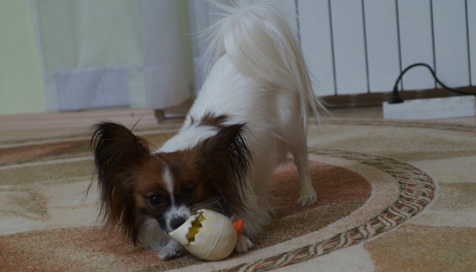 Koer mänguasjaga