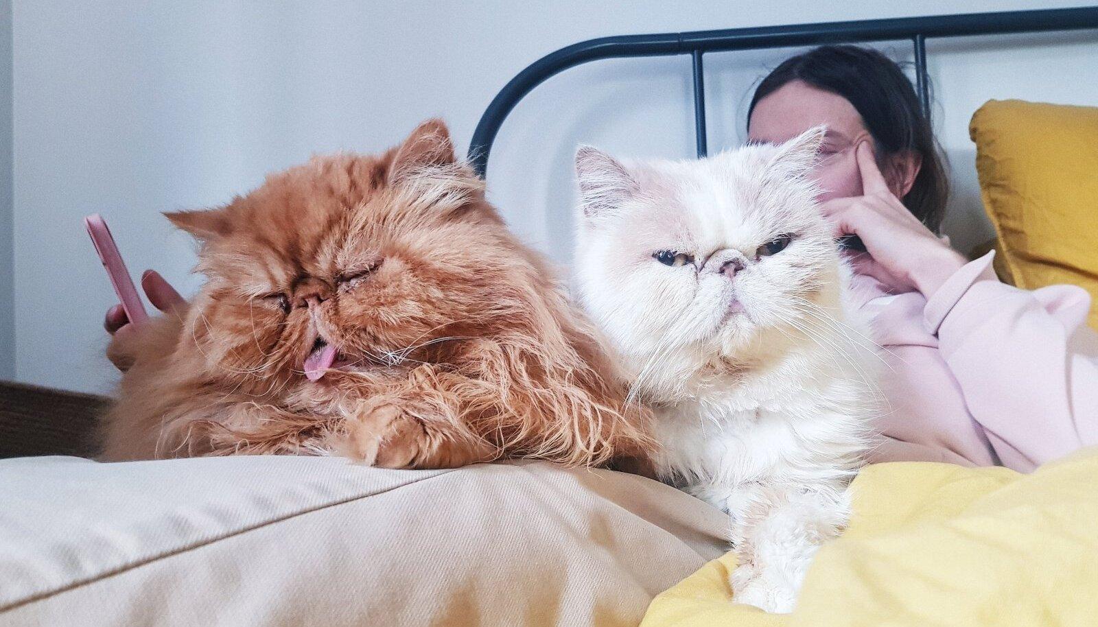 Helene Vetiku kassid Lord Puss-Puss ja Härra Miisu