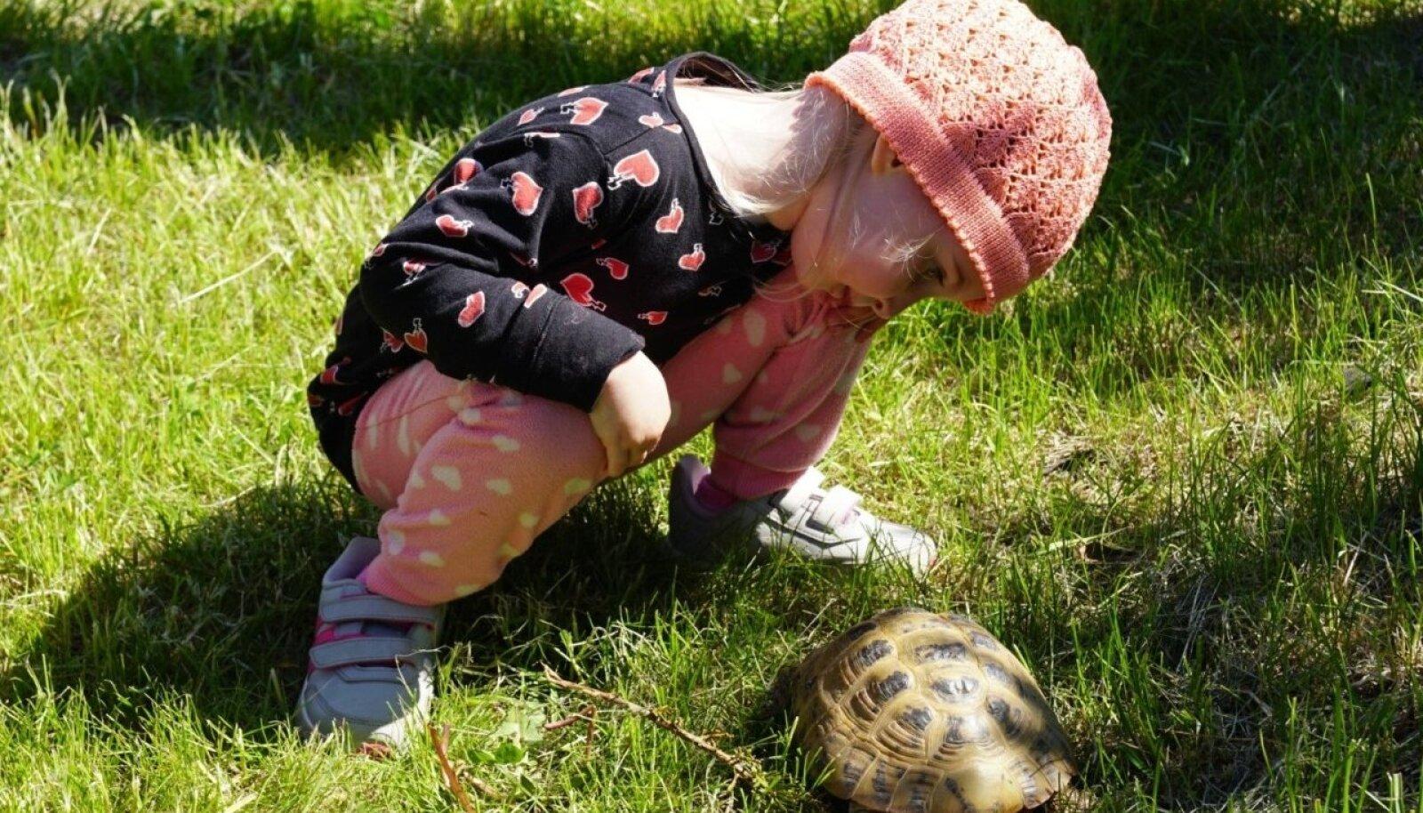Tallinna Loomaaed kutsub sünnipäevale
