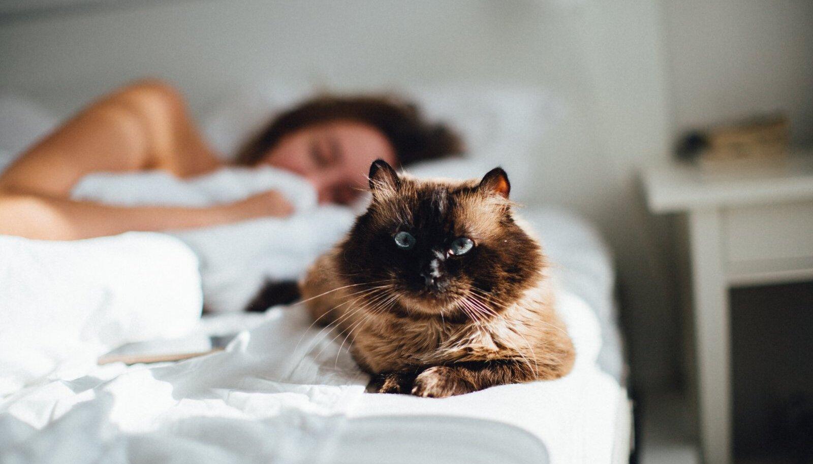 Teki alla ei soovi kass pugeda, sest linad takistavad teda vabalt liikumast