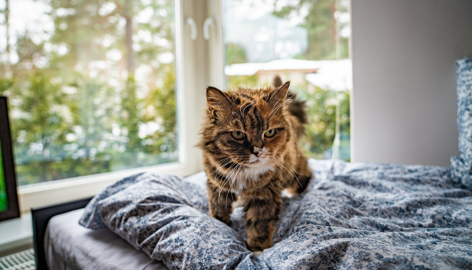 """Proua Salme kõrge vanus paneb kõiki alati ahhetama: """"Ta on ju nii väike ja armas!"""" või """"Kas nii vana kassi üldse kellelgi on?"""""""