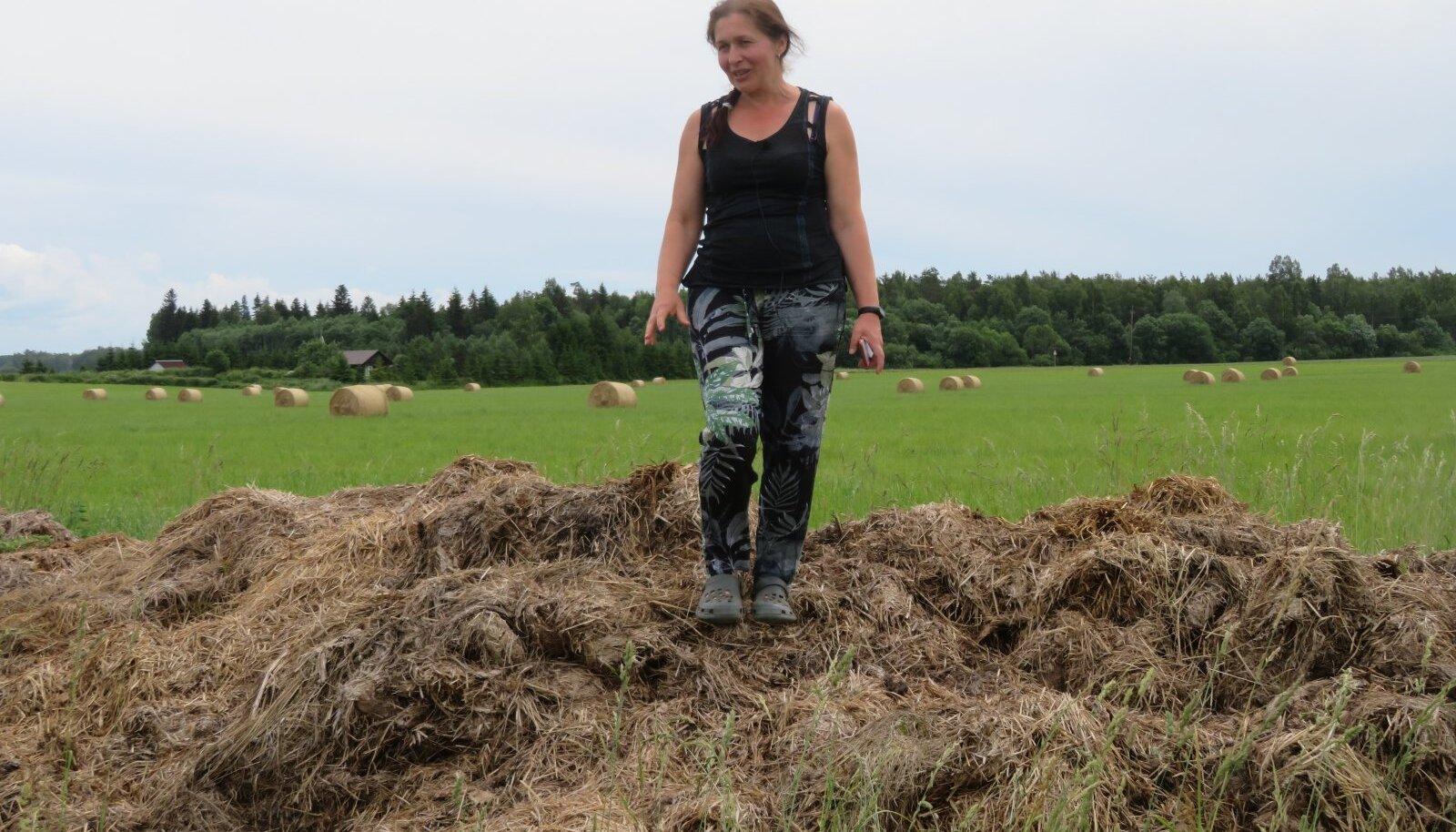 Puutsa talu perenaine Airi Külvet näitab sõnnikuauna. See ei reosta loodust, kui see pole üle 1,7 meetri kõrge ning on tehtud reegleid silmas pidades.