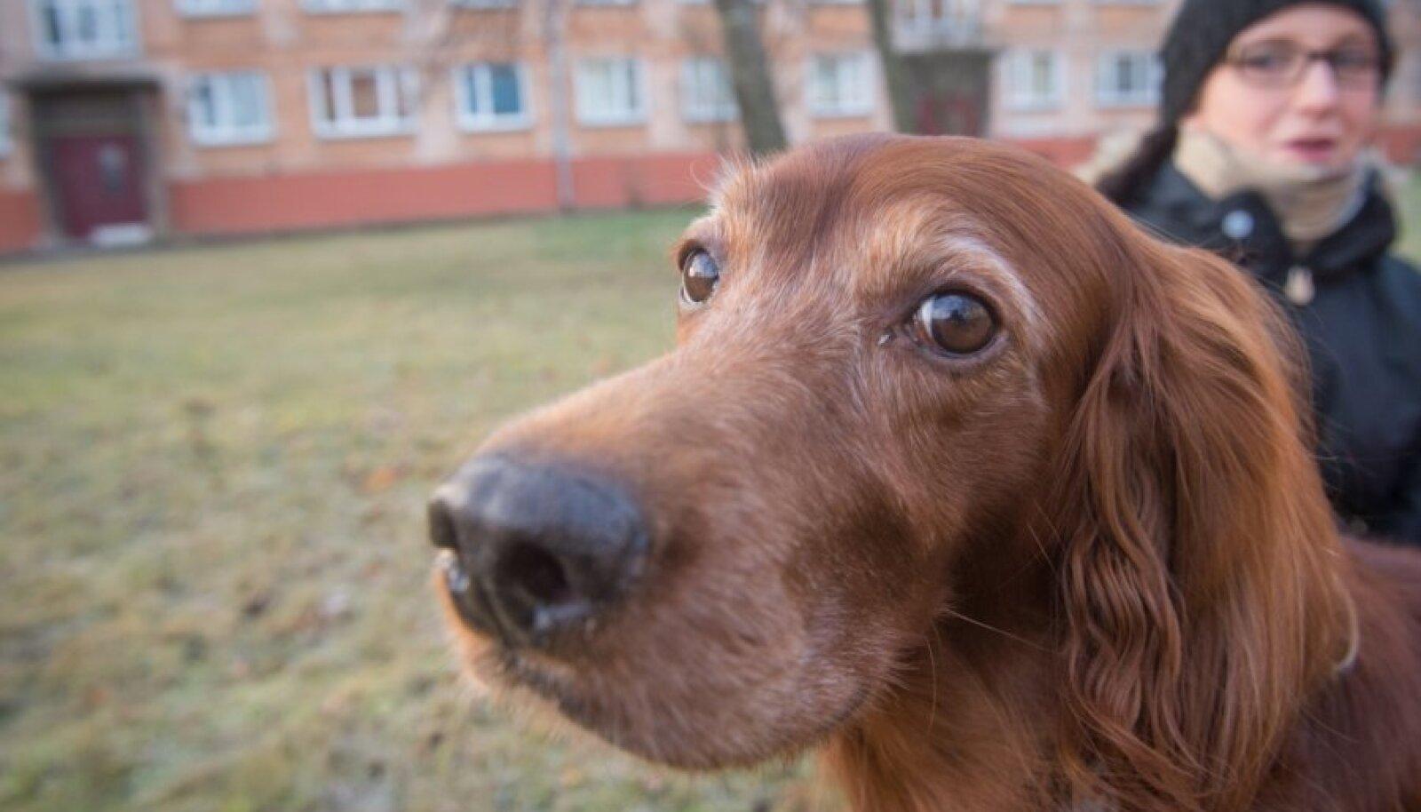 Mariki Käsper-Aluste ja koer Bella