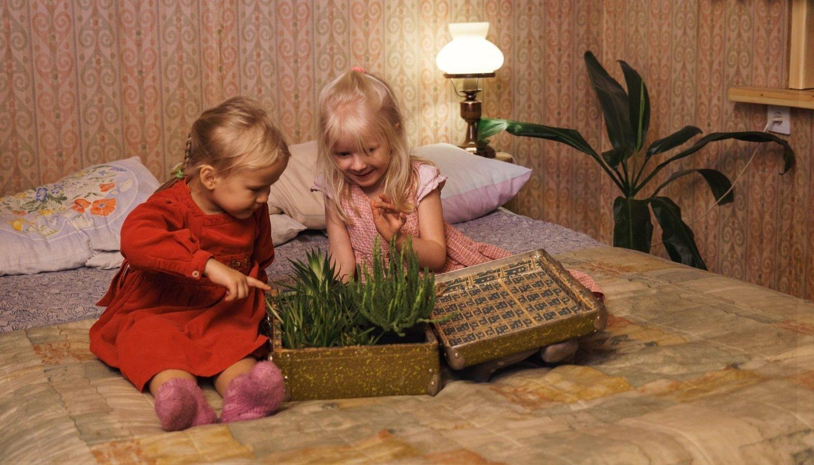 Tütred Merylin ja Anette-Mai uudistavad kohvris olevaid taimi: vähenõudlikku havortiat ja raipekaktust.