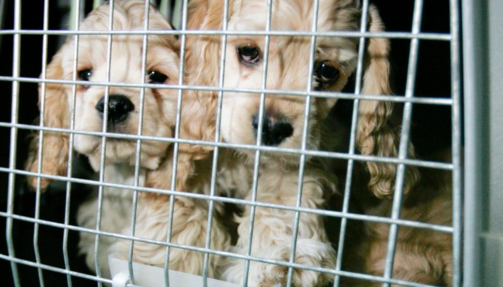 Koerad reisile suundumas