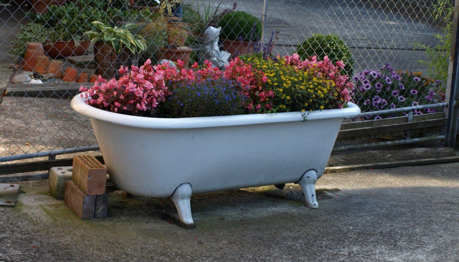 Kui vana vann ei ole veel vanaraua kokkuostu jõudnud, võib sel suvel seal lilli kasvatada.