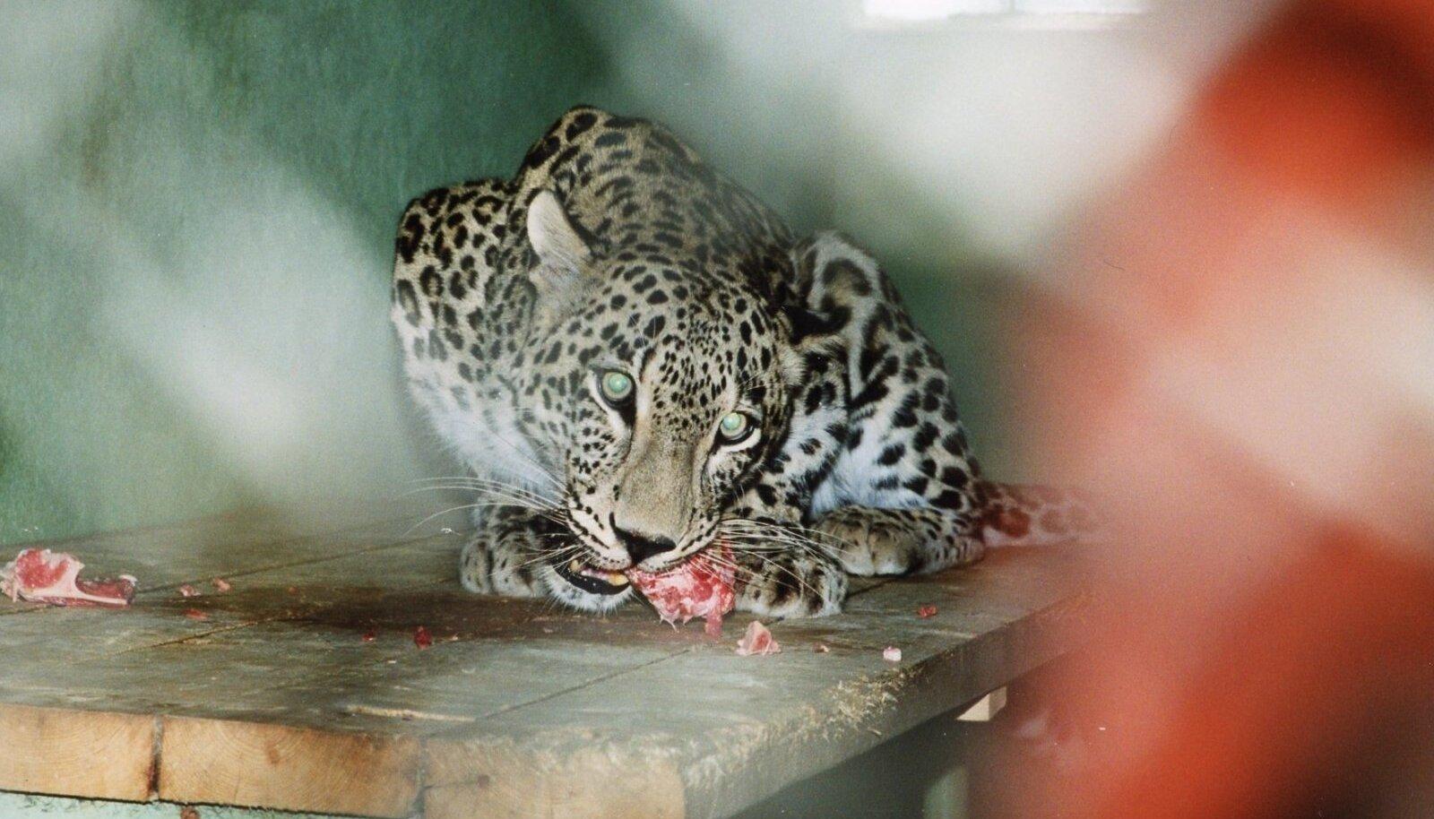 Gepardid hingavad eriti kiiresti
