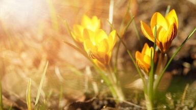 TÄNA ALGAB KEVAD: 10 asja, mida kevadisel pööripäeval teha