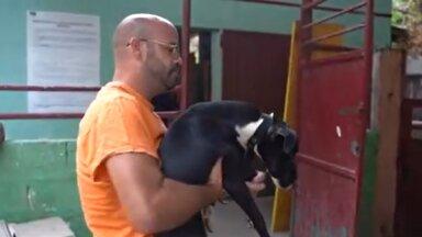Vabatahtlik päästja koera varjupaika toimetamas