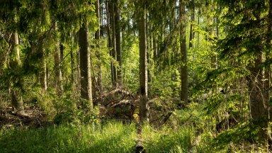 Metsa ei ole kogu aeg selliselt raiutud