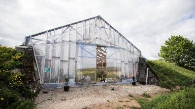 Mart Reinhold ehitas endisesse silohoidlasse seitsme meetri kõrguse kasvuhoone.