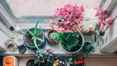 Muretsed taimede ülekastmise pärast? Üht eriti lihtsat nippi kasutades võid selle murega igaveseks hüvasti jätta