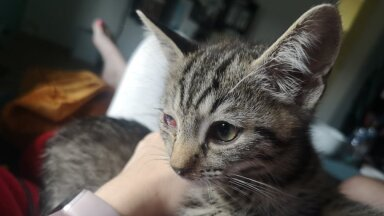 Kass Miku