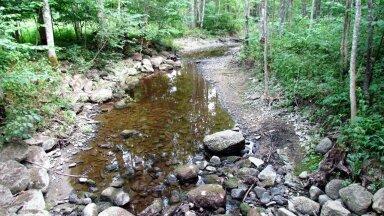 Leili metsalood | Põud, veepuudus ja parmud