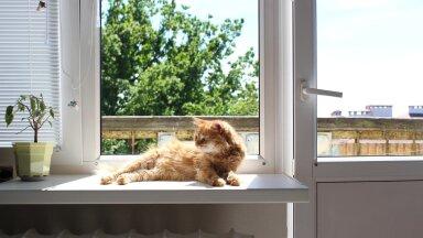 Умираете от жары? Вот 13 способов охладить дом без лишних затрат