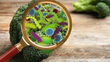 Toit ja palav ilm kokku ei sobi: vaata, millised vastikud ja ohtlikud bakterid kuuma ilmaga erinevates toitudes vohama hakkavad