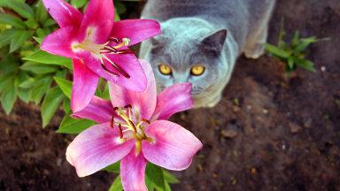 ETTEVAATUST! Kümme mürgist koduaia taime, mis võivad lemmikule ohtlikud olla