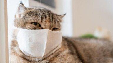 Кошки больше собак подвержены ковиду, но паниковать не стоит