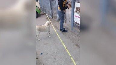 VIDEO | Naljalt alla ei anna: koer üritab mitme meetrise pulgaga väravast sisse saada - kohe kuidagi ei õnnestu!