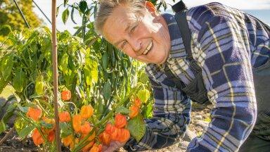 Piprakasvandust on Lauri Nebel oma Saulepi maakodus pidanud juba paarkümmend aastat. Piprast tehtud hoidiseid sööb terve pere hea meelega. Küüslauk on teine asi, mida ta kasvatab ning pere sööb seda nagu õuna, söögi kõrvale.