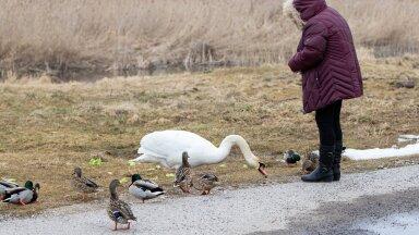 Juhani Püttsepp: oleme loomade ja lindudega sarnasemad, kui arvata oskame