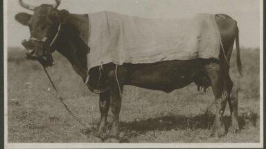 Lehm karjamaal
